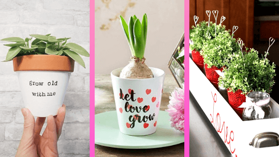 Valentines day plants